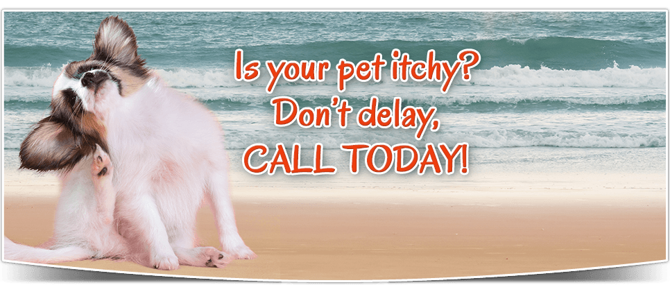 Is your pet itchy? Don't delay, call today!