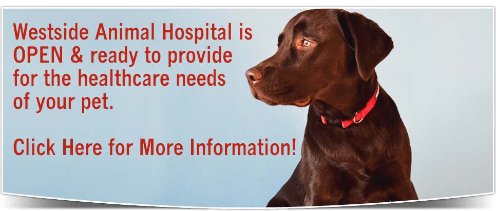 Westside Animal Hospital is OPEN and ready to provide for the healthcare needs of your pet. Click Here For More Information.